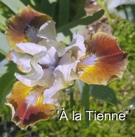 'A la Tienne !'