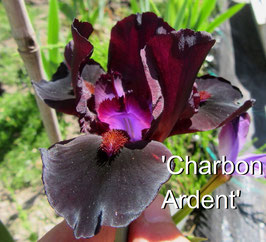 'Charbon Ardent'