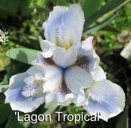 'Lagon Tropical'
