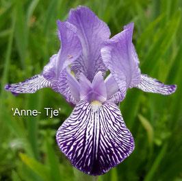 'Anne - Tje'