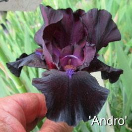 'Andro'