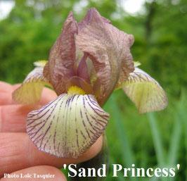 'Sand Princess'