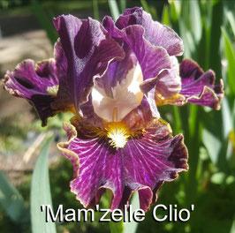 'Mam'zelle Clio'