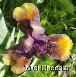 'Miel Chocolat'