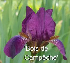 'Bois de Campêche'