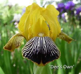'Dee's Own'