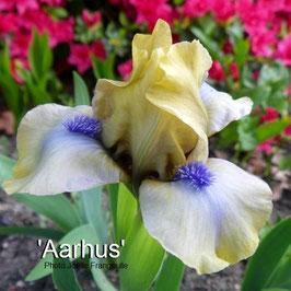 'Aarhus'