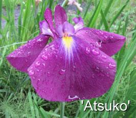 'Atsuko'