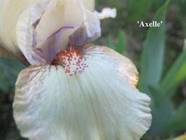 'Axelle'