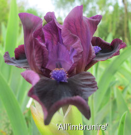 'All'imbrunire'