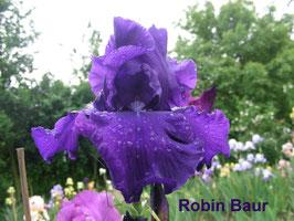 'Robin Baur'