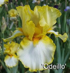 'Odeillo'