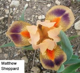 'Matthew Sheppard'