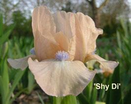 'Shy Di'