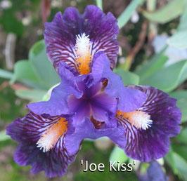 'Joe Kiss'