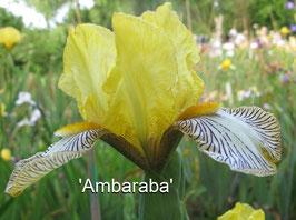 'Ambaraba'
