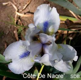 'Côte De Nacre'