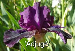 'Adjugé'