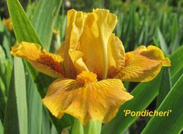 'Pondicheri'