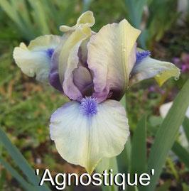 'Agnostique'