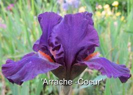 'Arrache-Coeur'