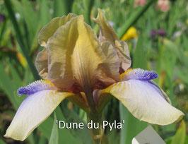'Dune du Pyla'