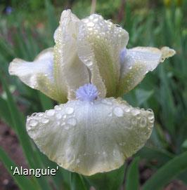 'Alanguie'