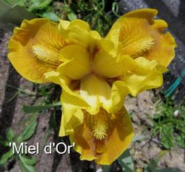'Miel d'Or'