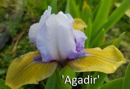 'Agadir'