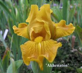 'Akhenaton