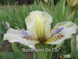 'Battement De Cils' - SDB - SA - 25cm
