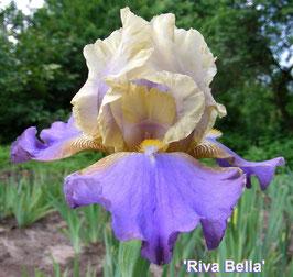 'Riva Bella'