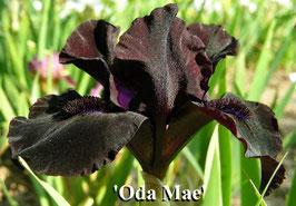 'Oda Mae' - SDB - 25cm