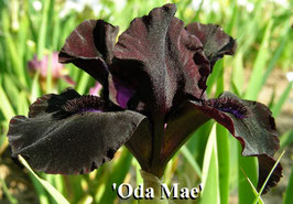 'Oda Mae'