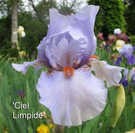 'Ciel Limpide' - BB - 65cm