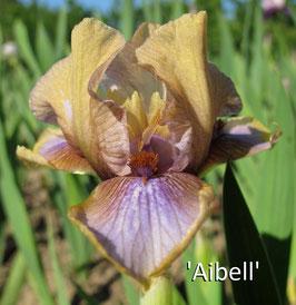'Aibell'