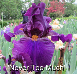 'Never Too Much'