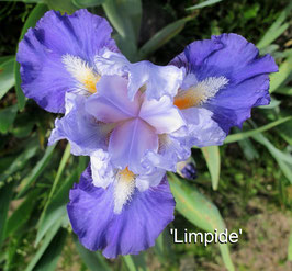 'Limpide'