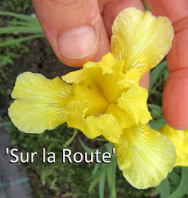 'Sur la Route'