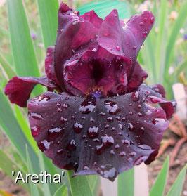 'Aretha'
