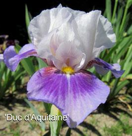 'Duc d'Aquitaine '