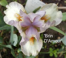 'Brin D'amour'