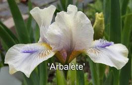 'Arbalète'