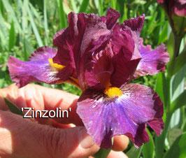 'Zinzolin'
