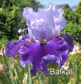 'Baïkal'