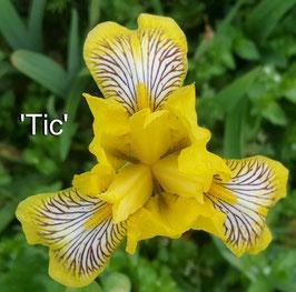 'Tic'