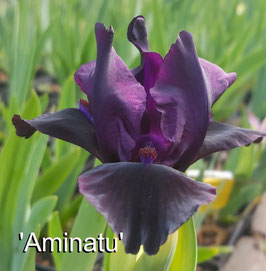 'Aminatu'