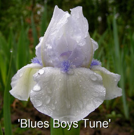 'Blues Boys Tune'