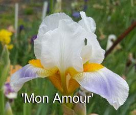 'Mon Amour'