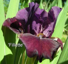 'Fillette'